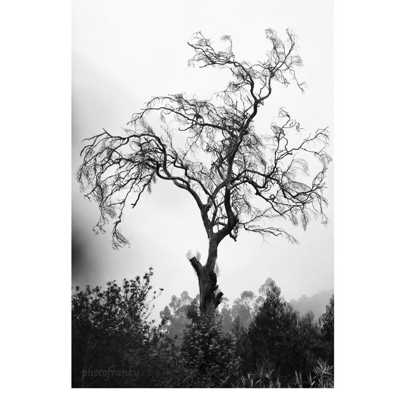 Damned´s Tree (photofranky)